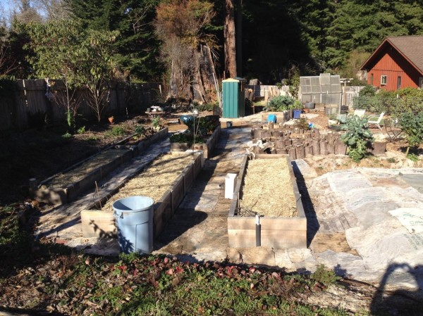 New beds put to sleep for the winter (manure added for nutrients with a layer of rice straw on top)