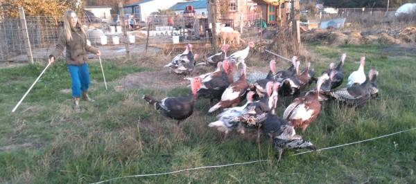 Turkey Day 1